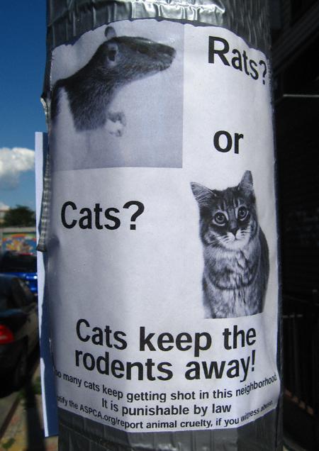 ratsorcats