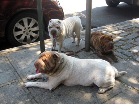 3dogs