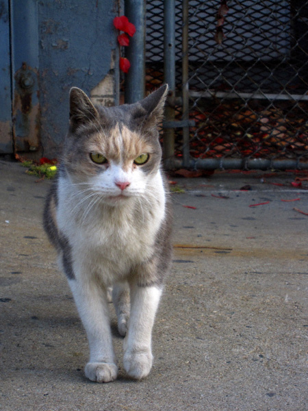 chattycathy1