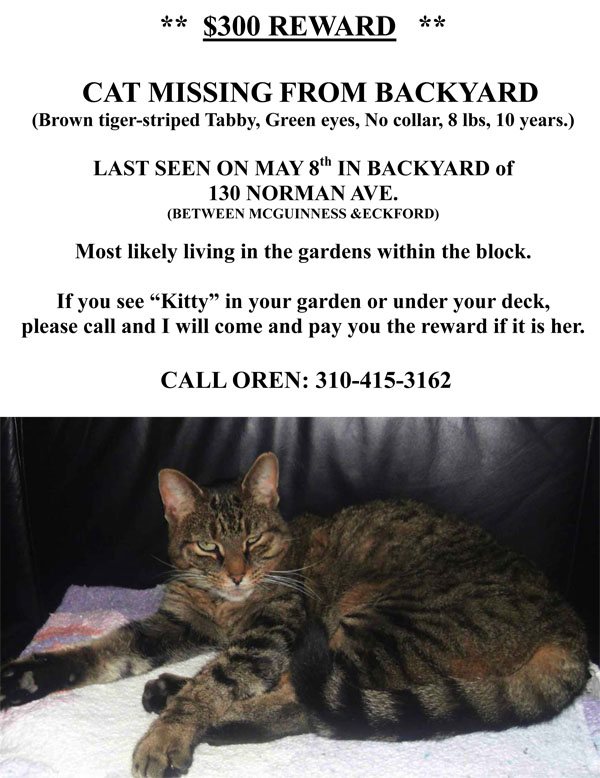 from the new york shitty inbox kitty is lost