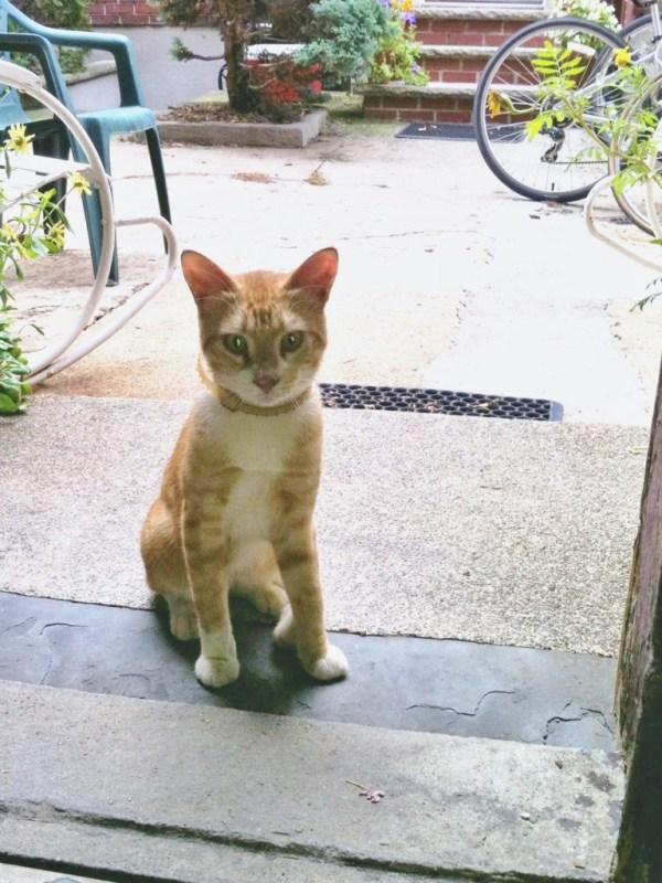 mysterycat