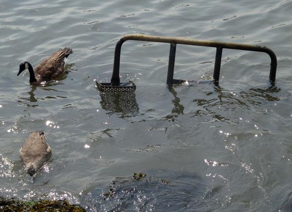 birds and uboat