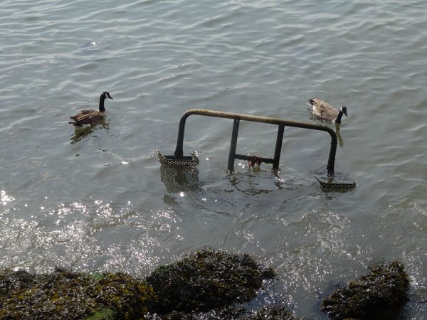 birdsanduboat2