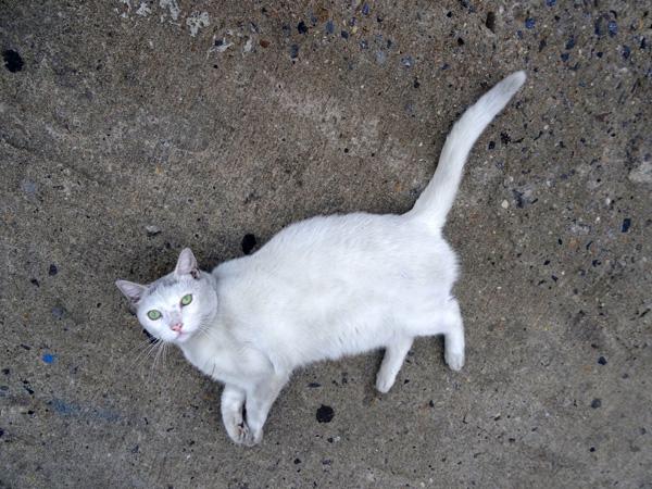 Meserole Street Cat nys