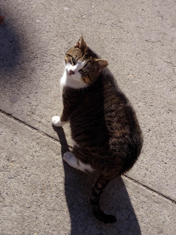 Quincy Street Cat 3 Big Gal nys