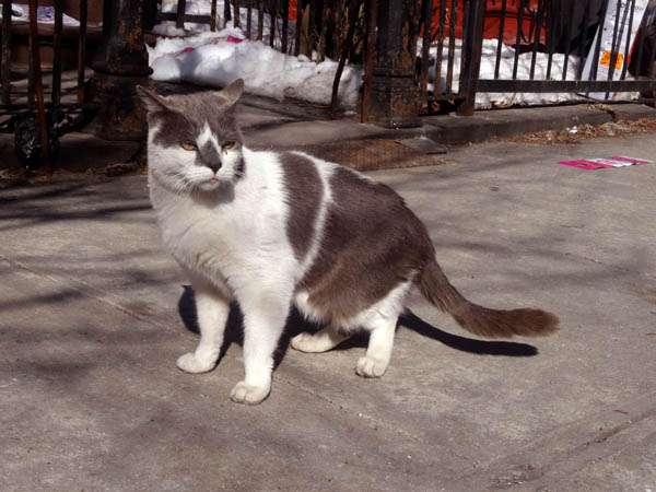 Quincy Street Cat nose nys