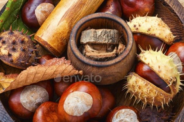 Chestnut in herbal medicine