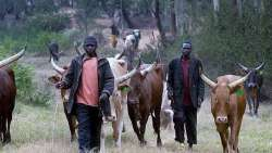 Herdsmen-farmers clash: 3,000 bandits surrender
