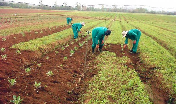 Nigeria to use biotechnology to improve crops