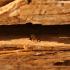 Traitement termite charpente