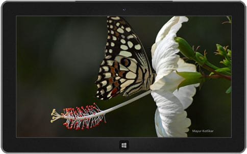 Butterflies of Nagpur theme