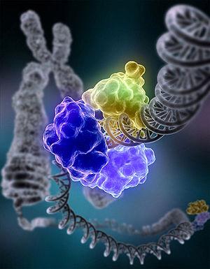 Космос биомолекулярной жизни. Часть 3