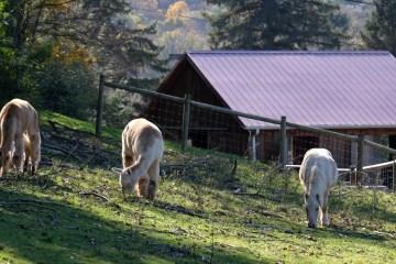 Hope Haven Farm