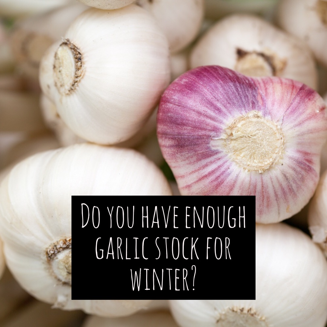 Superieur Garlic U2013 Winter Storage, Planting And Recipes