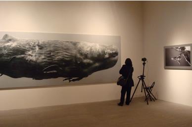 クジラ写真展風景