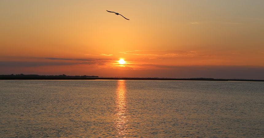 Sonnenuntergang am Meer mit schwebender Möwe