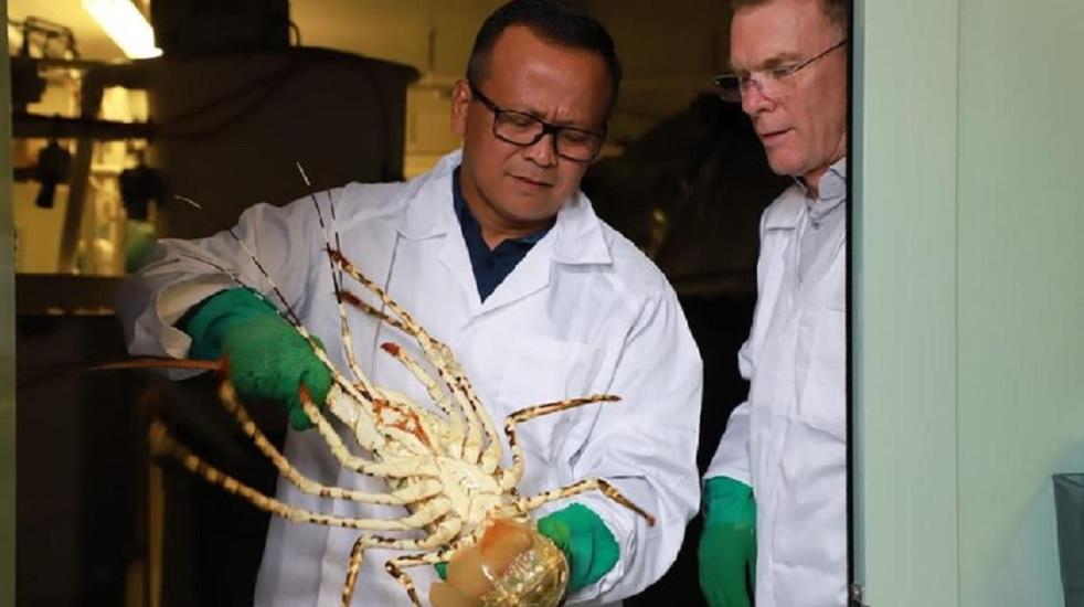 Gerindra Edhy Lobster
