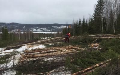 Avskoging i gang på Fiskløysa