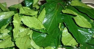 Ugu Leaves Fluted Pumpkin Health Benefits
