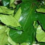 Ugu Leaves Fluted Pumpkin Health Benefits
