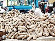 Image result for Benue govt to help yam farmers in new agricultural policy