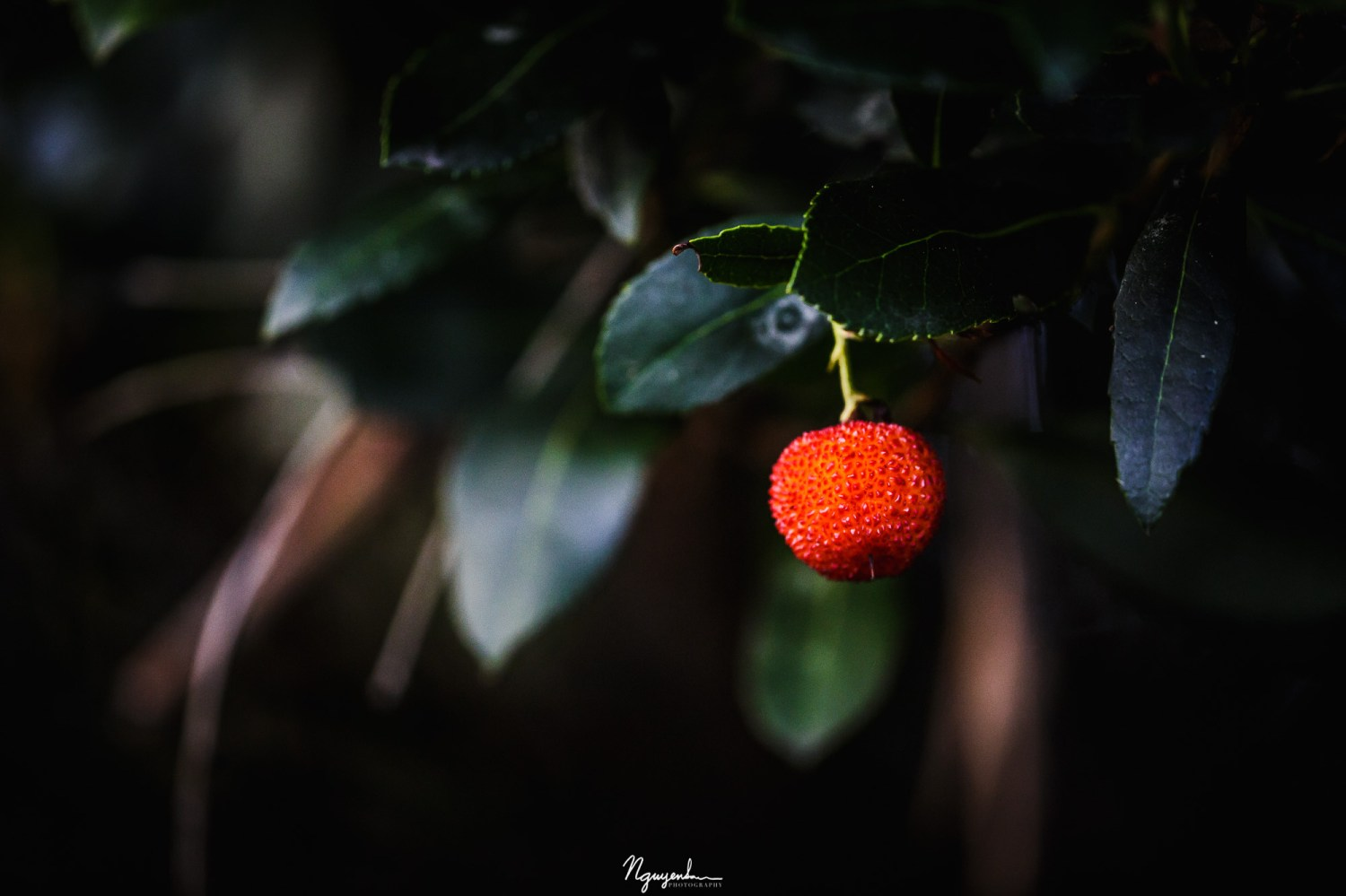 fruit of a strawberry tree