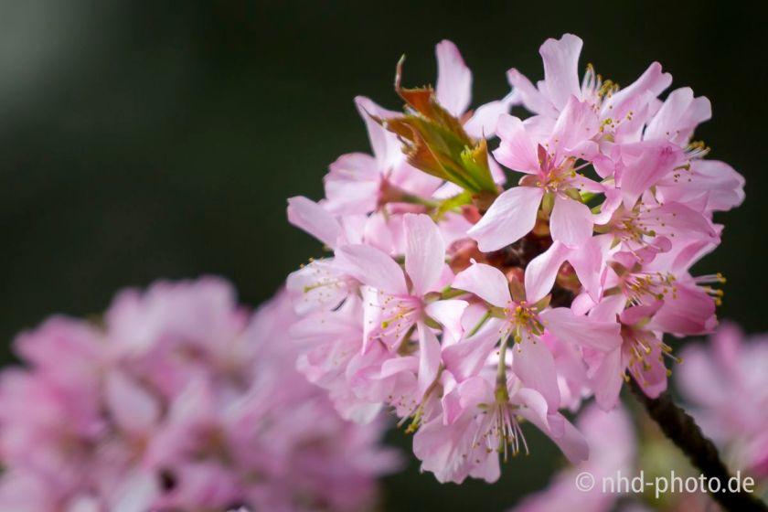 Frühlingsgruß - 5