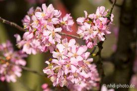 Frühlingsgruß - 7