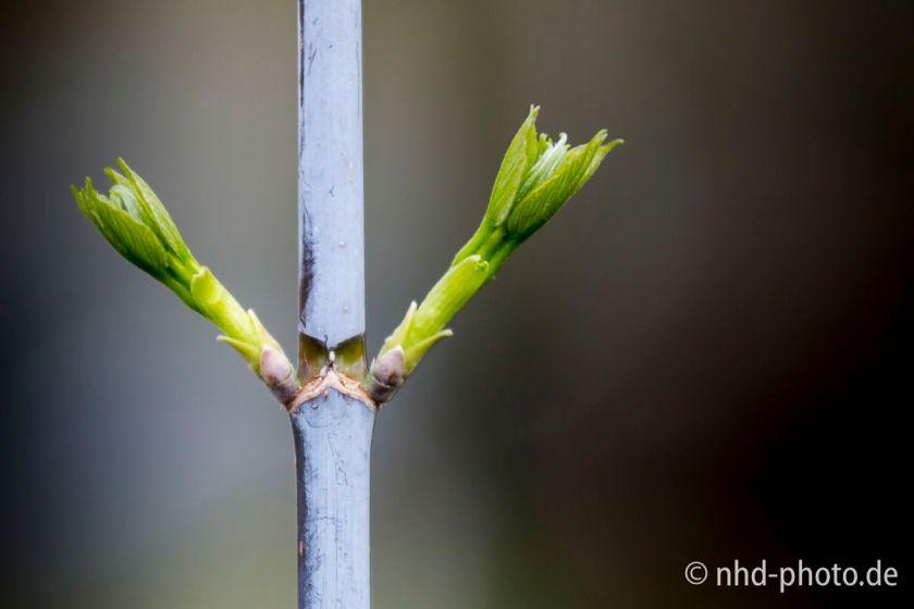 Frühlingsgruß - 9