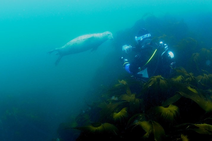 PADI Underwater Videographer Specialty
