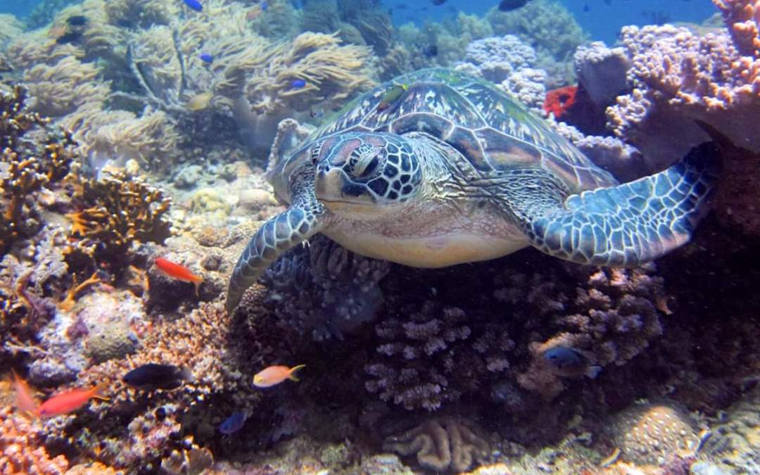 Philippines – Dive Day 2