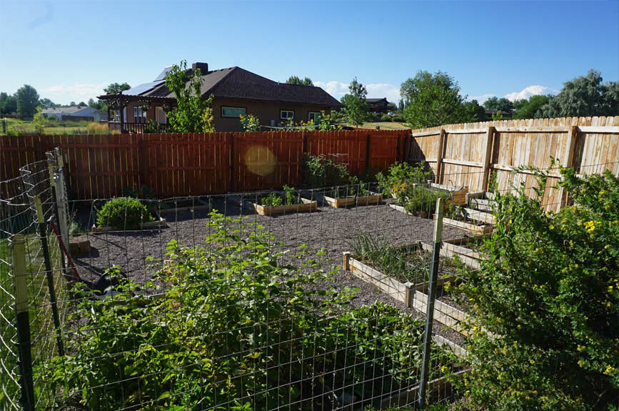 Fenced garden area with raised beds at 2575 Young Court