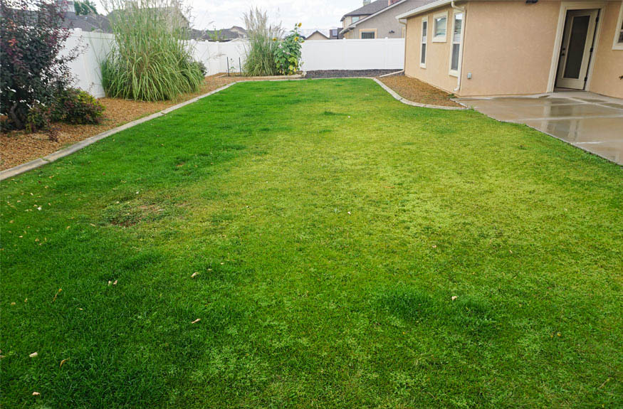 Grassed back yard at 175 Winter Hawk has timed & pressurized irrigation.