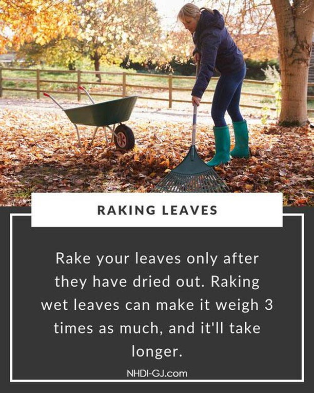 Fall leaves. They are so beautiful when they change color, and so delicate when they float to the ground.  Alas, we must clean them up! Make sure that they have dried out a bit before you try raking them up – it makes life SO MUCH easier!