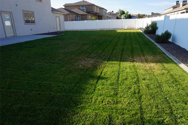 Large grassed area in the back yard of 171 Sun Hawk