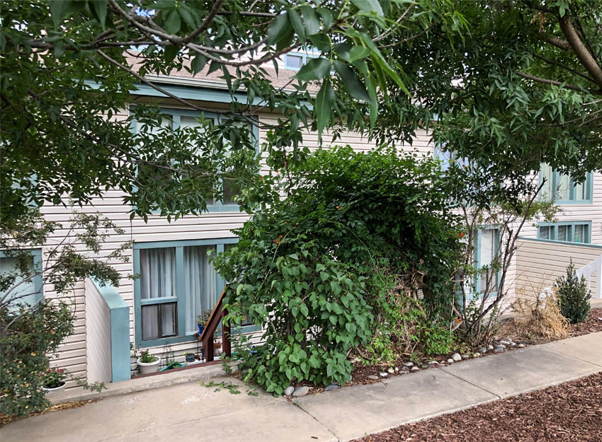 103 Bacon Ct #3 is a 2 bedroom, 1.5 bath townhouse located just east of Downtown Palisade, Colorado.