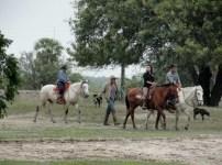 19.HorseBackriding