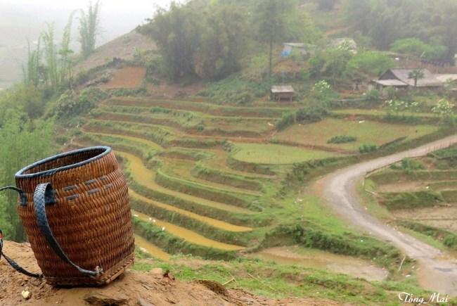 Ruộng bậc thang. Photo: TốngMai