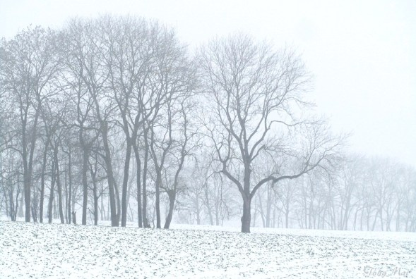 Luxembourg. Photo: TongMai