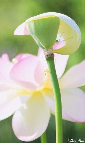 Che chở: cho Mẹ của con. Photo: TongMai