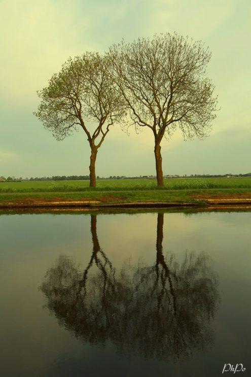 phpo holland sunrise p p