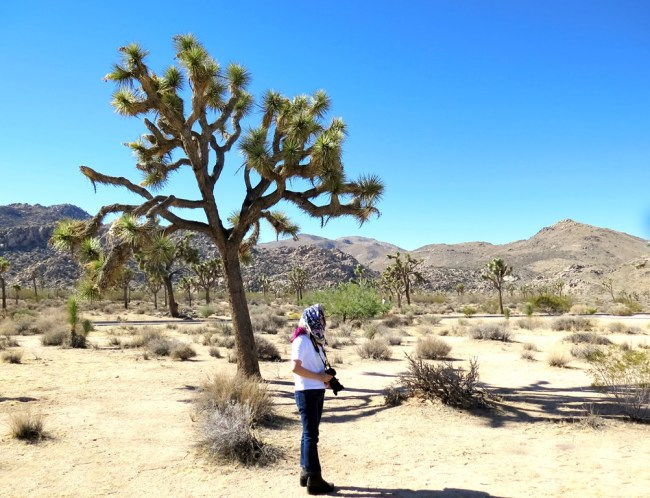 mai-2016-calif-joshua-tree-1f-p