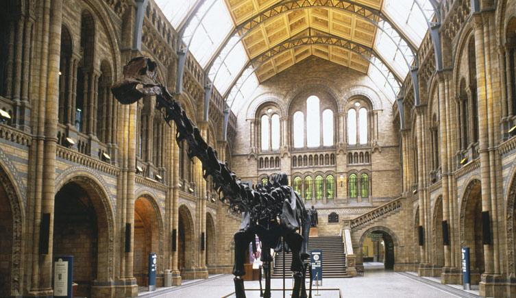 (Image courtesy of Natural History Museum, nhm.ac.uk)