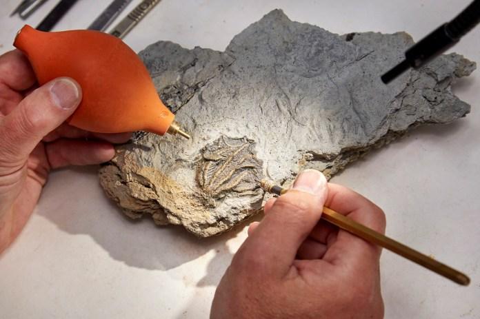 Ανακαλύφθηκε τεράστιος βυθός από Ιουρασικό βυθό στο λατομείο Cotswolds |  Μουσείο φυσικής ιστορίας