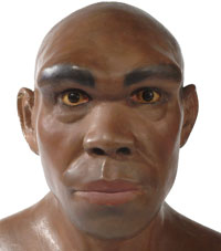 Model of what Homo heidelbergensis might have looked like.