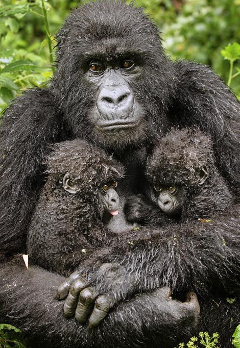 Esperanza gemelo de Diana Rebman, elogió en el Premio Gerald Durrell para especies amenazadas.