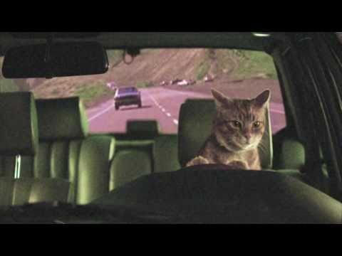 , Video: Holy Fuck – 'Red Lights' (Cat-tastic)