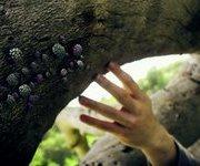 , Mountain Man – 'Animal Tracks'