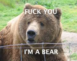 fuck you im a bear bear