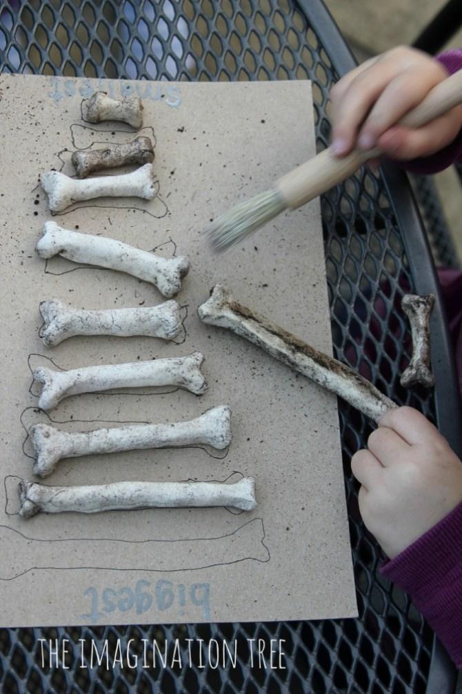 Cumpleaños de dinosaurios juego de excavación de huesos